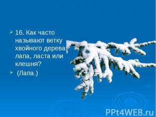 16. Как часто называют ветку хвойного дерева: лапа, ласта или клешня? 16. Как ча
