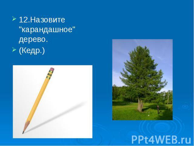 """12.Назовите """"карандашное"""" дерево. 12.Назовите """"карандашное"""" дерево. (Кедр.)"""