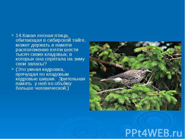 14.Какая лесная птица, обитающая в сибирской тайге, может держать в памяти расположение почти шести тысяч своих кладовых, в которых она спрятала на зиму свои запасы? 14.Какая лесная птица, обитающая в сибирской тайге, может держать в памяти располож…