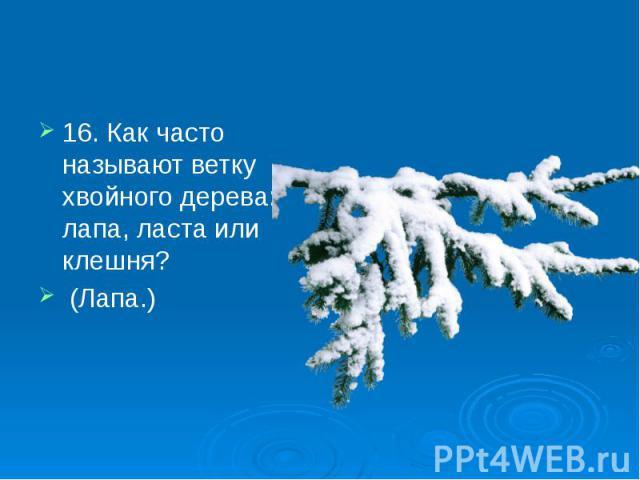 16. Как часто называют ветку хвойного дерева: лапа, ласта или клешня? 16. Как часто называют ветку хвойного дерева: лапа, ласта или клешня? (Лапа.)