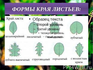 ФОРМЫ КРАЯ ЛИСТЬЕВ: