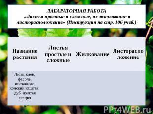 ЛАБАРАТОРНАЯ РАБОТА «Листья простые и сложные, их жилкование и листорасположение