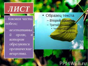ЛИСТ - боковая часть побега; вегетативный орган, в котором образуются органическ