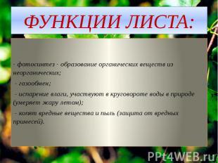 ФУНКЦИИ ЛИСТА: - фотосинтез - образование органических веществ из неорганических