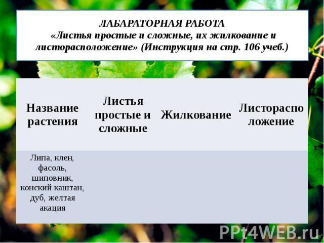 ЛАБАРАТОРНАЯ РАБОТА «Листья простые и сложные, их жилкование и листорасположение» (Инструкция на стр. 106 учеб.)