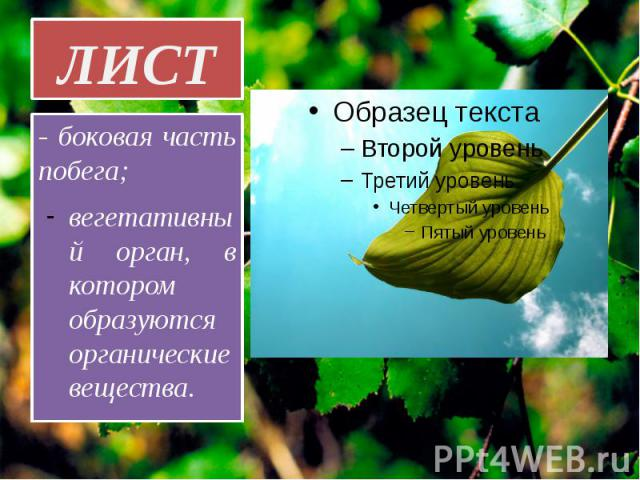 ЛИСТ - боковая часть побега; вегетативный орган, в котором образуются органические вещества.
