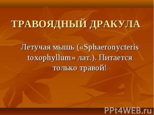 Летучая мышь («Sphaeronycteris toxophyllum» лат.). Питается только травой! Летуч