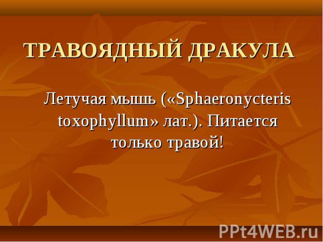 Летучая мышь («Sphaeronycteris toxophyllum» лат.). Питается только травой! Летучая мышь («Sphaeronycteris toxophyllum» лат.). Питается только травой!