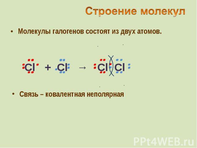 Молекулы галогенов состоят из двух атомов. Молекулы галогенов состоят из двух атомов.
