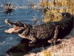 В воде живут хищные крокодилы