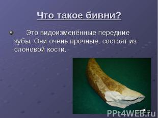 Что такое бивни? Это видоизменённые передние зубы. Они очень прочные, состоят из