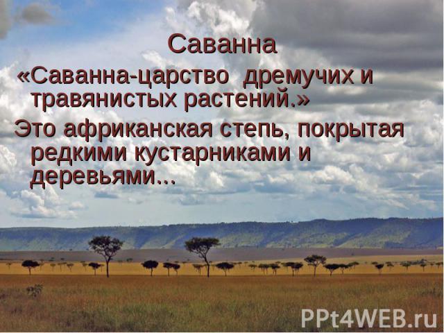 «Саванна-царство дремучих и травянистых растений.» «Саванна-царство дремучих и травянистых растений.» Это африканская степь, покрытая редкими кустарниками и деревьями...