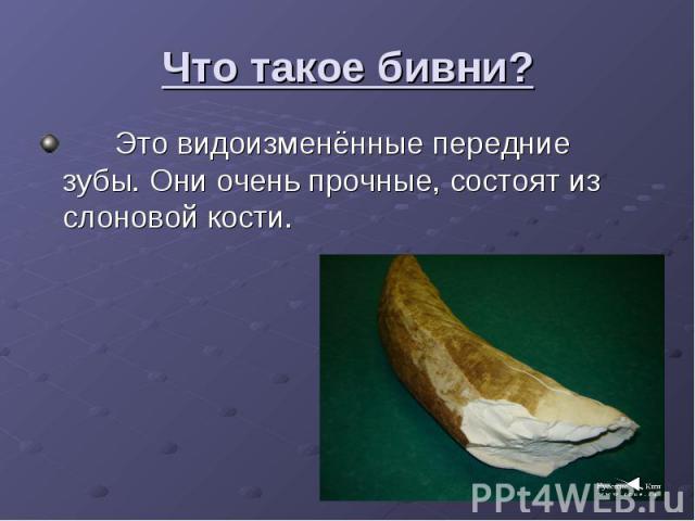 Что такое бивни? Это видоизменённые передние зубы. Они очень прочные, состоят из слоновой кости.