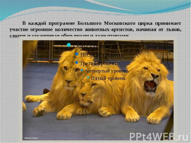 В каждой программе Большого Московского цирка принимает участие огромное количество животных-артистов, начиная от львов, слонов и заканчивая обезьянами и даже птицами.