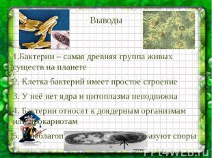 Выводы 1.Бактерии – самая древняя группа живых существ на планете 2. Клетка бакт