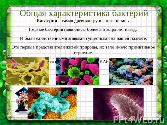 Общая характеристика бактерий Бактерии – самая древняя группа организмов. Первые бактерии появились, более 3,5 млрд лет назад. И были единственными живыми существами на нашей планете. Это первые представители живой природы, их тело имело примитивное…