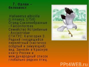 7. Орлан – белохвост 7. Орлан – белохвост Haliaeetus albicilla (Linnaeus, 1758)