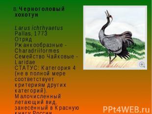 8. Черноголовый хохотун 8. Черноголовый хохотун Larus ichthyaetus Pallas, 1773 О
