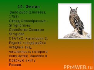 10. Филин 10. Филин Bubo bubo (Linnaeus, 1758) Отряд Совообразные - Strigiformes