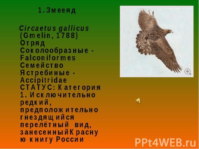 Змееяд Змееяд Circaetus gallicus (Gmelin, 1788) Отряд Соколообразные - Falconiformes Семейство Ястребиные - Accipitridae СТАТУС: Категория 1. Исключительно редкий, предположительно гнездящийся перелётный вид, занесенныйКрасную книгу России