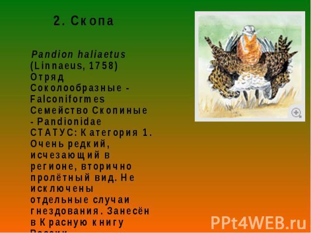 2. Скопа 2. Скопа Pandion haliaetus (Linnaeus, 1758) Отряд Соколообразные - Falconiformes Семейство Скопиные - Pandionidae СТАТУС: Категория 1. Очень редкий, исчезающий в регионе, вторично пролётный вид. Не исключены отдельные случаи гнездования. За…