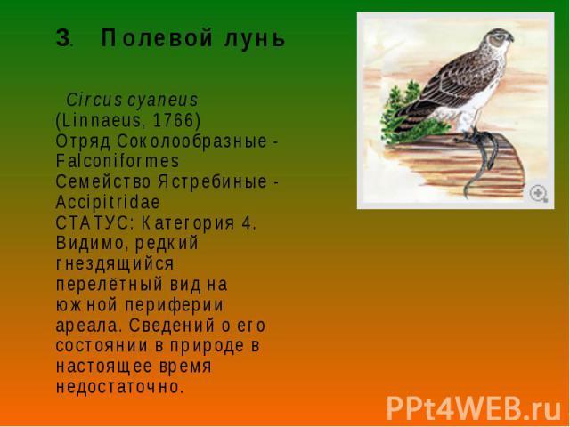 3. Полевой лунь 3. Полевой лунь Circus cyaneus (Linnaeus, 1766) Отряд Соколообразные - Falconiformes Семейство Ястребиные - Accipitridae СТАТУС: Категория 4. Видимо, редкий гнездящийся перелётный вид на южной периферии ареала. Сведений о его состоян…