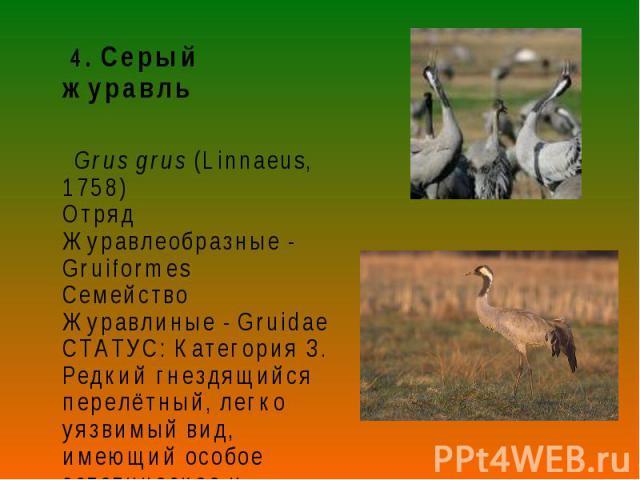4. Серый журавль 4. Серый журавль Grus grus (Linnaeus, 1758) Отряд Журавлеобразные - Gruiformes Семейство Журавлиные - Gruidae СТАТУС: Категория 3. Редкий гнездящийся перелётный, легко уязвимый вид, имеющий особое эстетическое и символическое значение.
