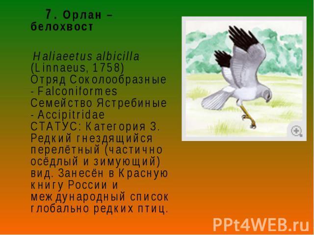 7. Орлан – белохвост 7. Орлан – белохвост Haliaeetus albicilla (Linnaeus, 1758) Отряд Соколообразные - Falconiformes Семейство Ястребиные - Accipitridae СТАТУС: Категория 3. Редкий гнездящийся перелётный (частично осёдлый и зимующий) вид. Занесён в …
