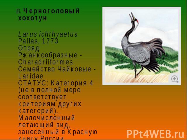 8. Черноголовый хохотун 8. Черноголовый хохотун Larus ichthyaetus Pallas, 1773 Отряд Ржанкообразные - Charadriiformes Семейство Чайковые - Laridae СТАТУС: Категория 4 (не в полной мере соответствует критериям других категорий). Малочисленный летающи…