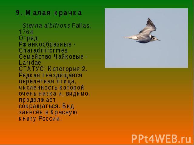 9. Малая крачка 9. Малая крачка Sterna albifrons Pallas, 1764 Отряд Ржанкообразные - Charadriiformes Семейство Чайковые - Laridae СТАТУС: Категория 2. Редкая гнездящаяся перелётная птица, численность которой очень низка и, видимо, продолжает сокраща…