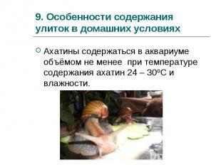 Ахатины содержаться в аквариуме объёмом не менее при температуре содержания ахат