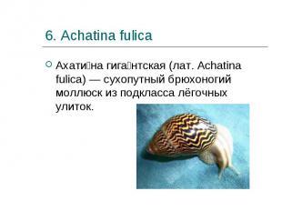 Ахати на гига нтская (лат. Achatina fulica) — сухопутный брюхоногий моллюск из п