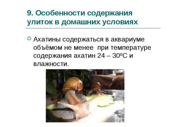 Ахатины содержаться в аквариуме объёмом не менее при температуре содержания ахатин 24 – 30ºС и влажности. Ахатины содержаться в аквариуме объёмом не менее при температуре содержания ахатин 24 – 30ºС и влажности.