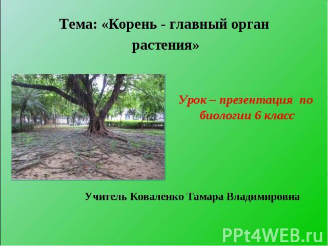 Тема: «Корень - главный орган растения»