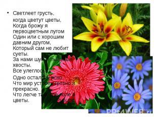 Светлеет грусть, Светлеет грусть, когда цветут цветы, Когда брожу я первоцветным