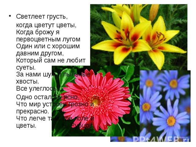 Светлеет грусть, Светлеет грусть, когда цветут цветы, Когда брожу я первоцветным лугом Один или с хорошим давним другом, Который сам не любит суеты. За нами шум и пыльные хвосты. Все улеглось! Одно осталось ясно, Что мир устроен грозно и прекрасно. …