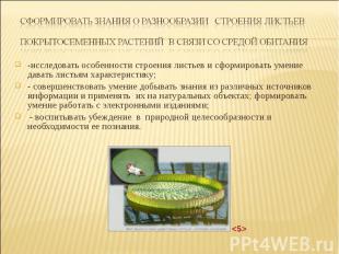 -исследовать особенности строения листьев и сформировать умение давать листьям х