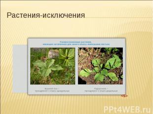 Растения-исключения
