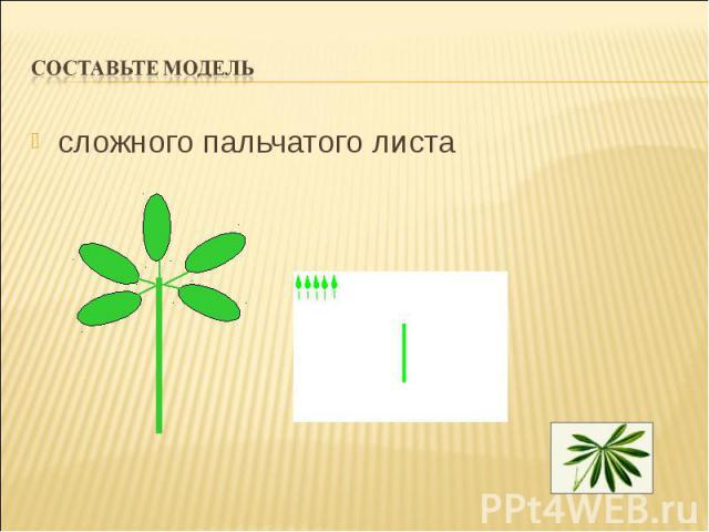 сложного пальчатого листа сложного пальчатого листа