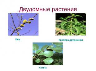 Двудомные растения