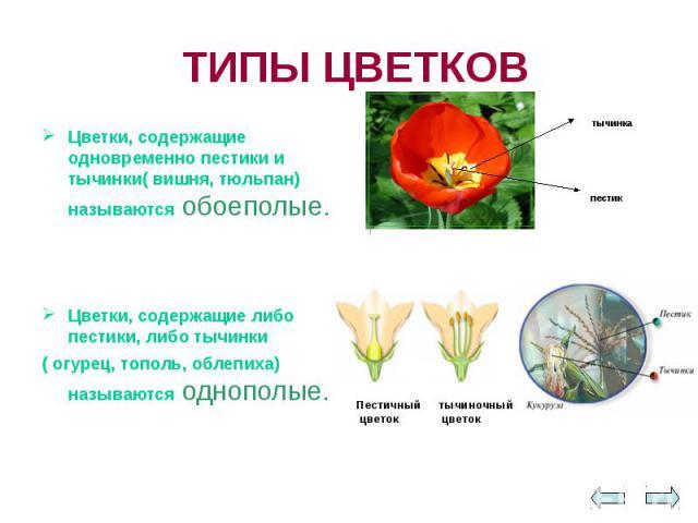 ТИПЫ ЦВЕТКОВ Цветки, содержащие одновременно пестики и тычинки( вишня, тюльпан) называются обоеполые. Цветки, содержащие либо пестики, либо тычинки ( огурец, тополь, облепиха) называются однополые.