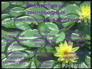 Многообразие земноводных Класс Земноводные (2400 видов)