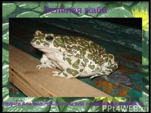 Зелёная жаба