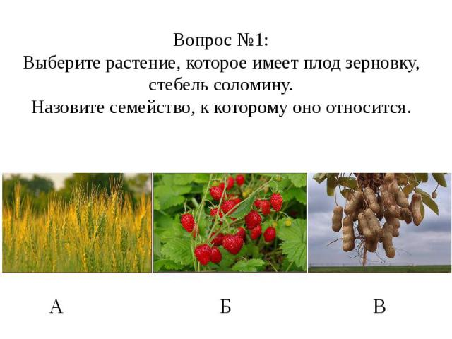 Вопрос №1: Выберите растение, которое имеет плод зерновку, стебель соломину. Назовите семейство, к которому оно относится.