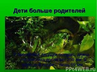 У гвинейской лягушки псеудис, длина головастика достигает 250 мм, а взрослой осо