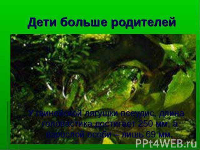 У гвинейской лягушки псеудис, длина головастика достигает 250 мм, а взрослой особи – лишь 69 мм.