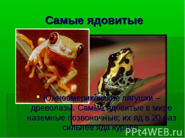 Южноамериканские лягушки – древолазы. Самые ядовитые в мире наземные позвоночные; их яд в 20 раз сильнее яда кураре.