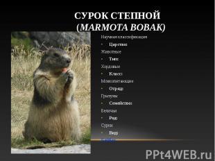 Научная классификация Научная классификация Царство: Животные Тип: Хордовые Клас