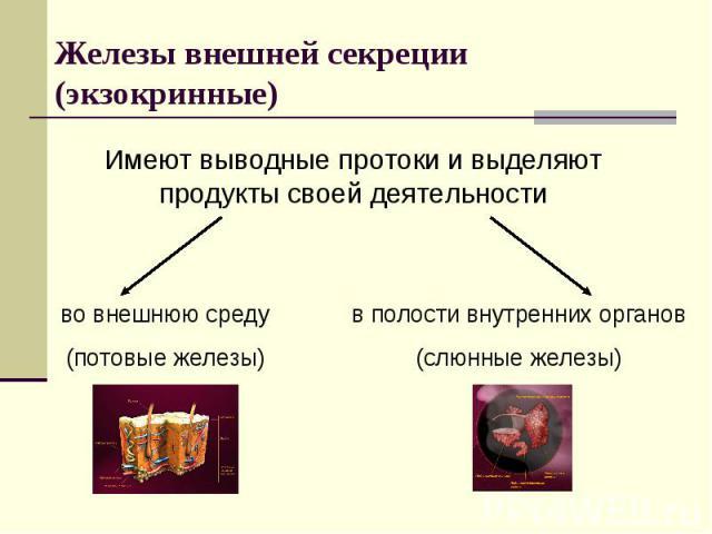 Железы внешней секреции (экзокринные)