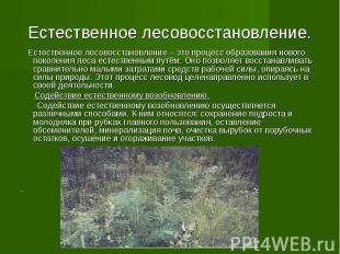 Естественное лесовосстановление. Естественное лесовосстановление – это процесс о